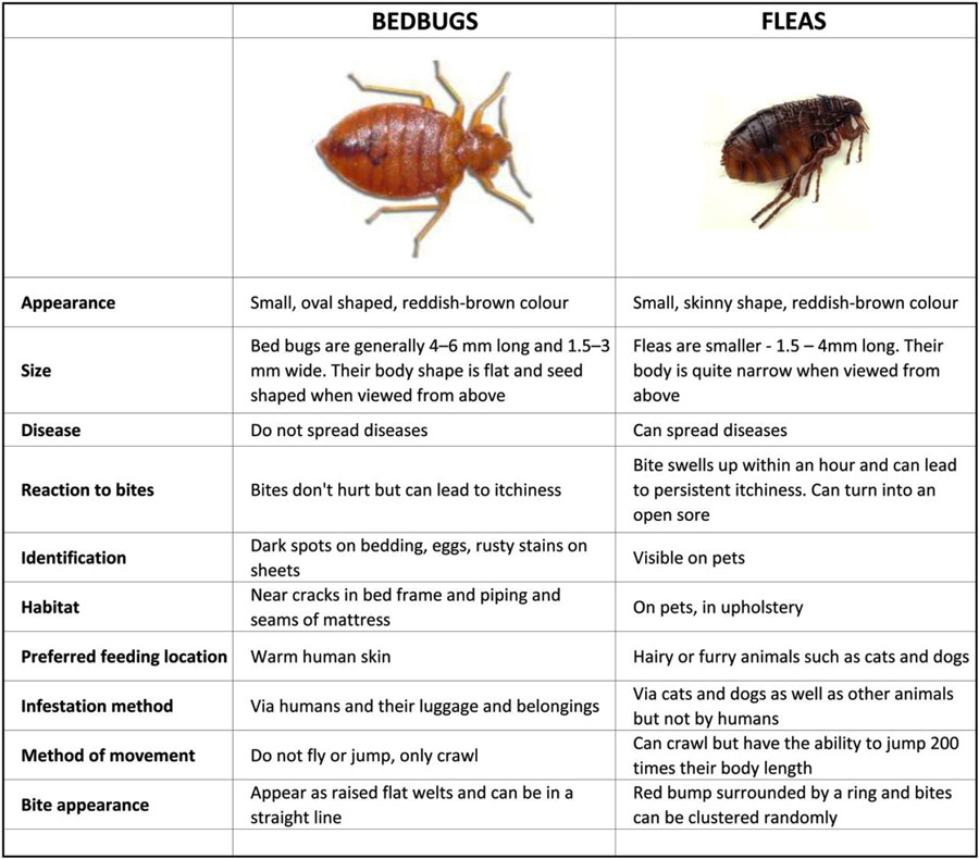 What Is The Best Flea Fogger On The Market  How to get rid